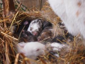 бебета зайци